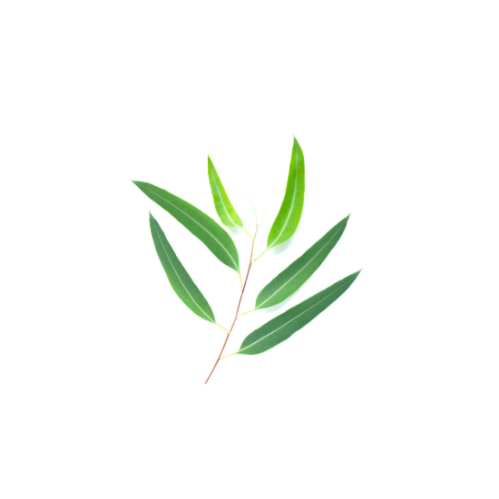 Eukaliptusz olaj