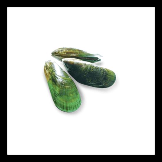 Zöldkagyló